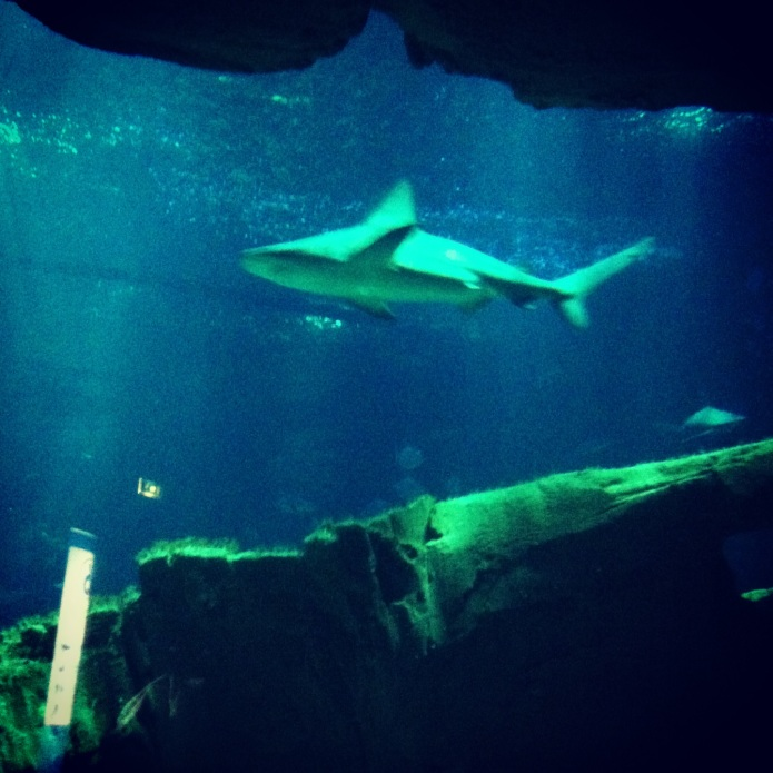 aquariumparis9